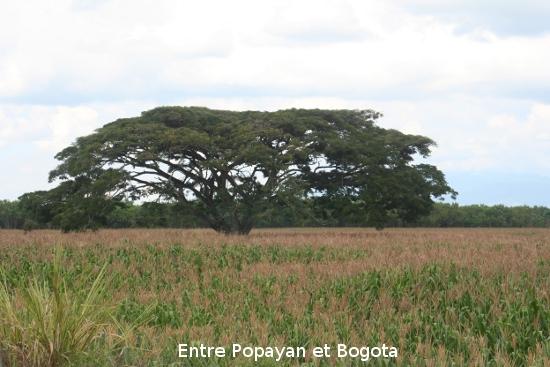 0498_de_popayan__bogota.jpg