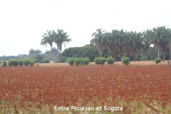 0537_de_popayan__bogota.jpg